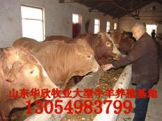 养牛知识 养牛行情 养牛效益