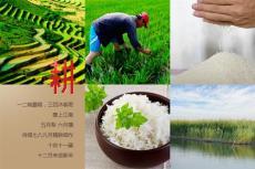 粮油行业新军天下稻王品牌碱地米招商