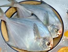 出售顶级鲳鱼