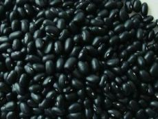 大上海低价供应优质黑豆 杂粮报价