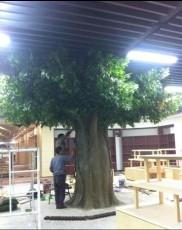 北京仿真榕樹出售