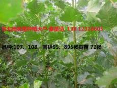 2015年楊樹苗價格