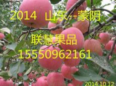 山东苹果批发