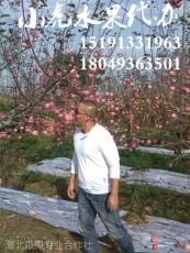 陜西膜袋蘋果產地價格紙袋紅富士蘋果價格