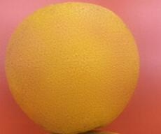 批發新鮮有機洞庭胡柚 清熱去火潤肺止咳