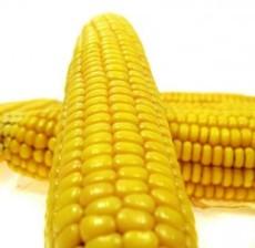 供应玉米 1670元/吨