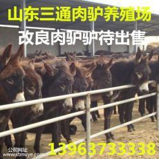 浙江肉驢養殖場