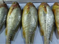 供應魚類產品