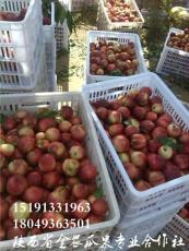 陜西油桃518油桃批發價格