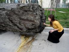 私下收购乌木金丝楠木多少钱一吨